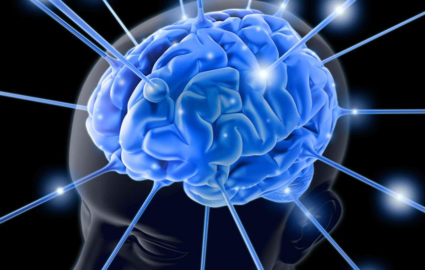 Crean la primera copia del cerebro humano en un laboratorio